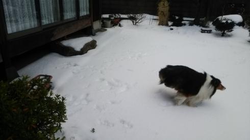 雪もんど後ろ足