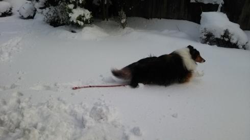 もんど雪1