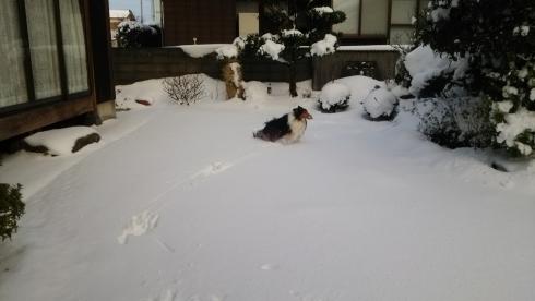 もんど雪0