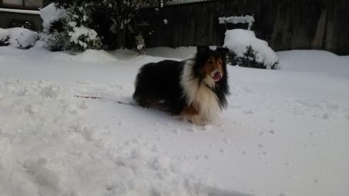もんど雪2