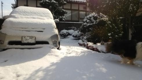 2月16雪庭