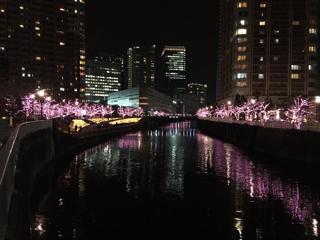 目黒川の冬の桜イルミネーション①