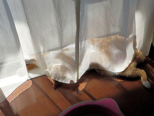カーテンから足が…