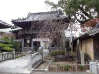 19立江寺