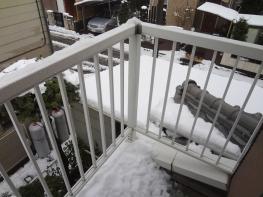 東京に雪が降りました。