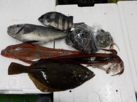 3鮮魚セット20151130