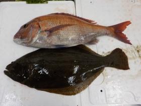 8鮮魚セット20151130