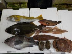 7鮮魚セット20151230