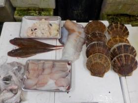 12鮮魚セット20151230
