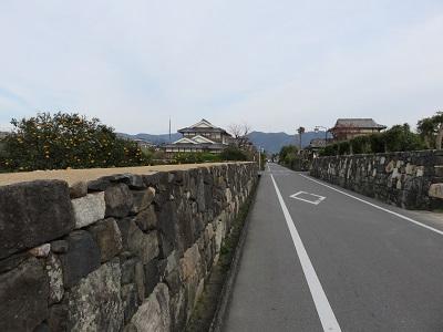 IMG_0750 萩