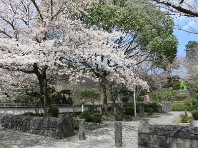 IMG_1070 桜