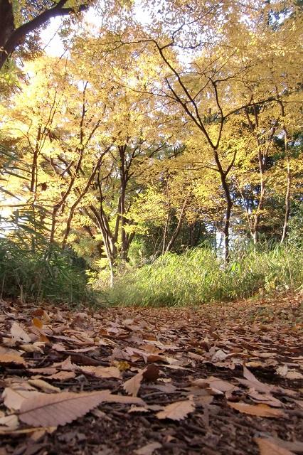 黄葉前線 真っ盛り