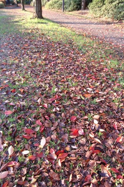 枯葉舞う冬枯れの小径