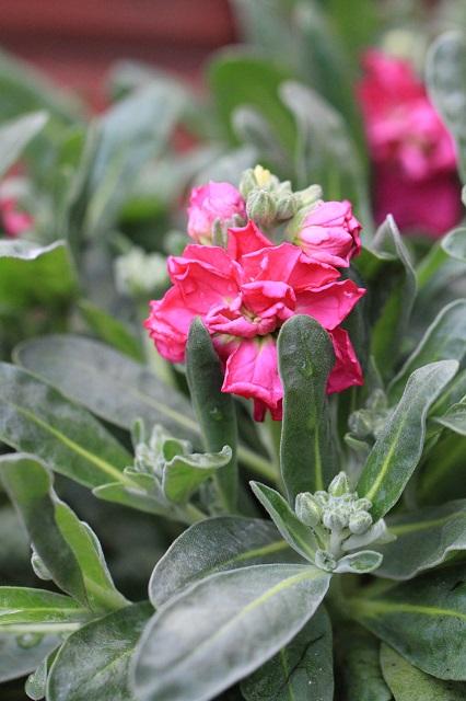 春の花 ストック
