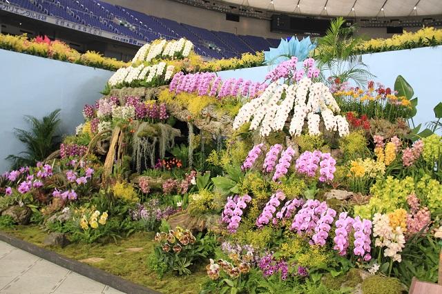 ディスプレイ部門 オープンクラス 最優秀賞 日本洋蘭農業協同組合