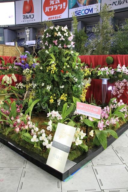 ディスプレイ部門 愛好家クラス 奨励賞 日本リカステ協会