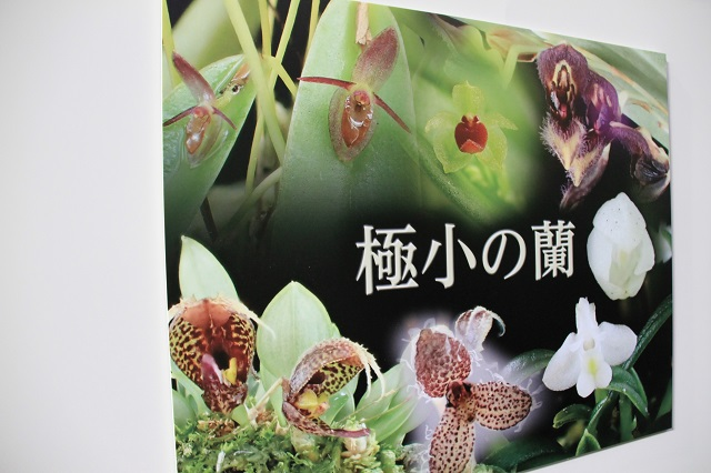 特別企画 世界最大の蘭と最小の蘭