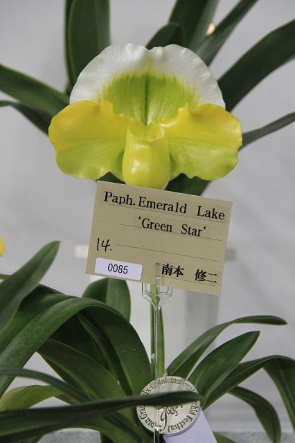 "Paph.Emerald Lake ""Green Star"""