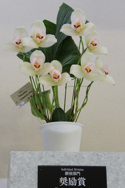 "Lyc.Rakuhoku ""Strawberry Milk""(奨励賞)"