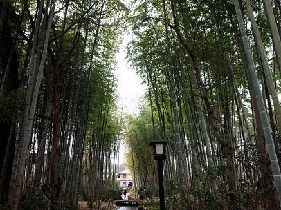 修善寺の竹林あるき(2)