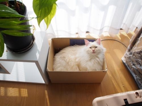 箱入り白玉猫2