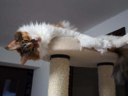 小豆猫_タワー3
