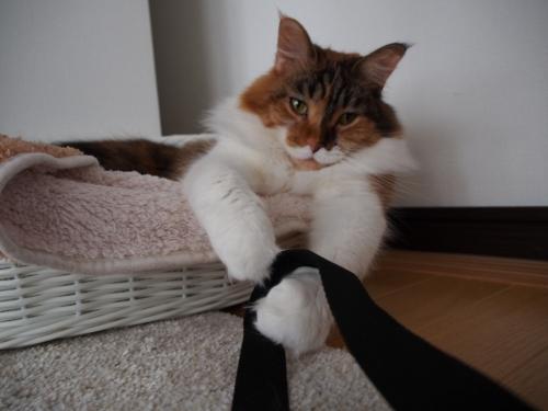 小豆猫_紐よこせ!