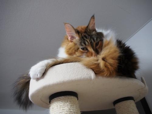 毛づくろい_小豆猫1