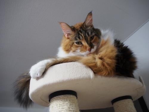 毛づくろい_小豆猫3