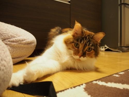 よこせ!_小豆猫1