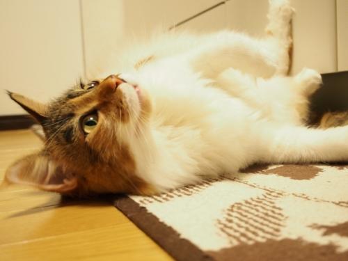 よこせ!_小豆猫3