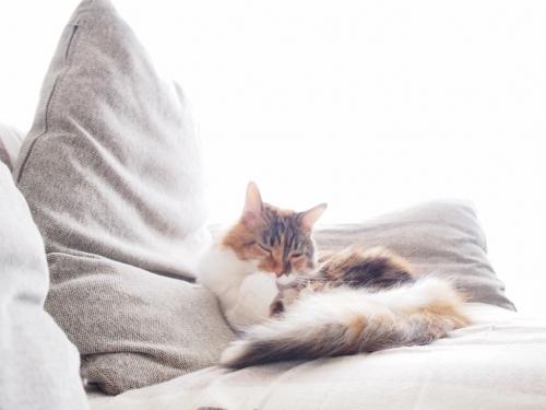 小豆猫_窓辺3