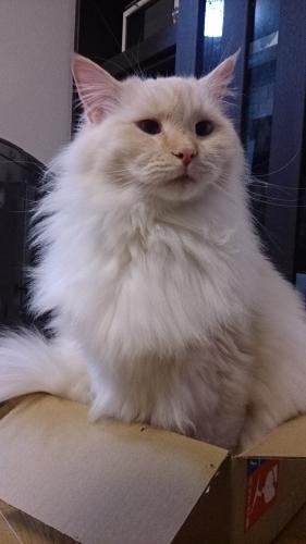 みっちり‗白玉猫1