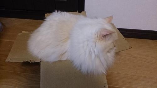 みっちり‗白玉猫3