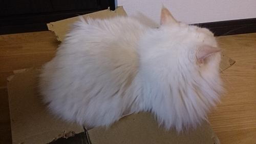 みっちり‗白玉猫2