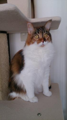 小豆猫_うふっ3