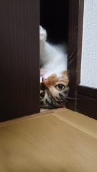 小豆猫‗隙間4