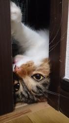 小豆猫‗隙間5