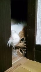 小豆猫‗隙間7