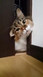 小豆猫‗隙間9