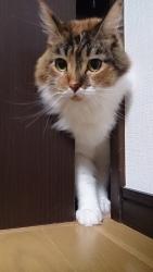 小豆猫‗隙間10