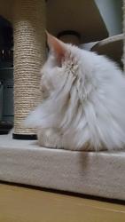 小豆猫‗隙間11