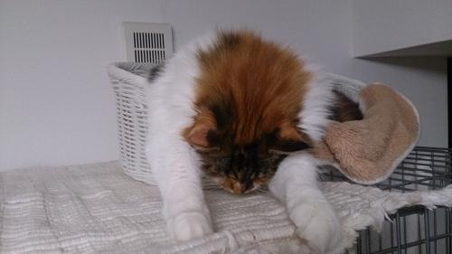 ハミ出る小豆猫