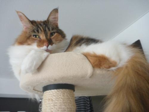 小豆猫‗1
