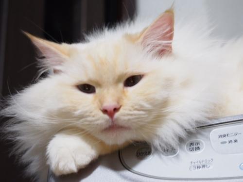 白玉猫_ヒーター4