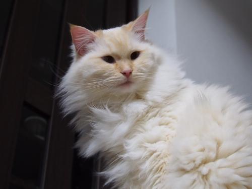 白玉猫_ヒーター5