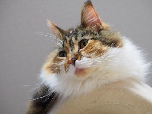 小豆猫_てっぺん2