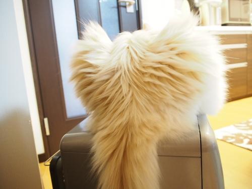 白玉猫_おしり