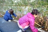 草刈 (1)