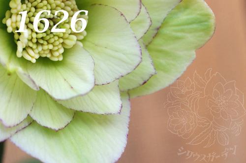 1626c.jpg